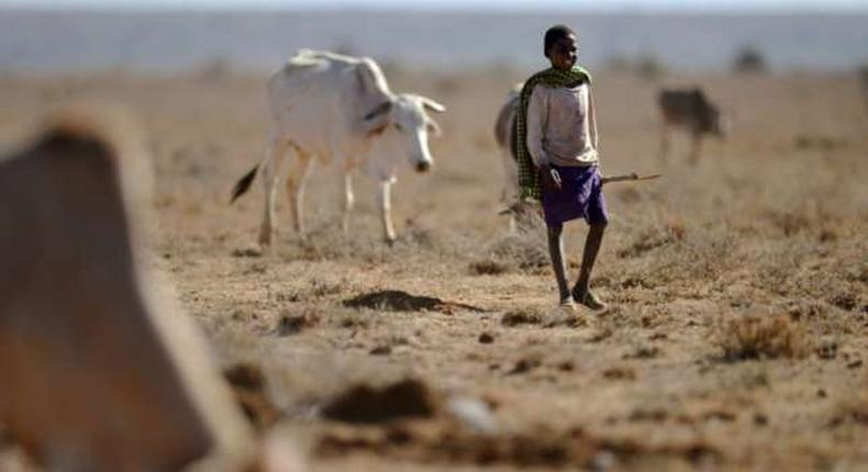 Millions of Kenyans suffer from drought and famine.
