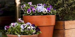 Najlepsze promocje dla domu i ogrodu - wiosna z OBI, Leroy Merlin i Castoramą