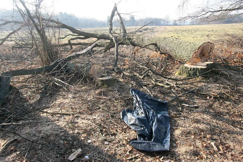 Koszmar! Drzewo zmiażdżyło drwala!