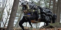 Robot osioł w amerykańskiej armii. FILM