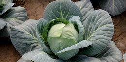 Jesz to warzywo? Źle wpływa na twój nastrój