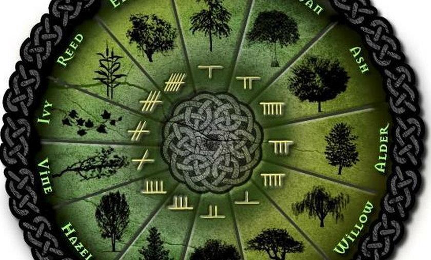 Sprawdź, jakim drzewem jesteś (Horoskop celtycki)