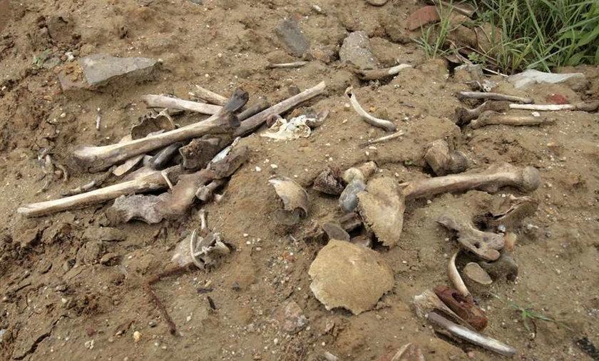 Szok! Ludzkie czaszki i kości w ZOO!