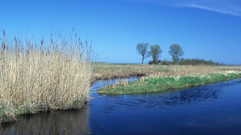 Rezerwat Beka, ujście rzeki Redy
