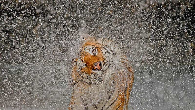 National Geographic Photography Contest 2012