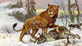 Na Syberii znaleziono świetnie zachowane szczątki lwów jaskiniowych