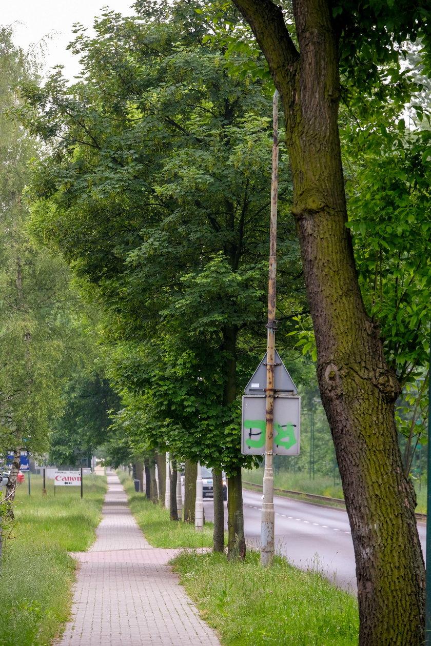 Katowice. Miasto chce wybudować ścieżki rowerowe pod które trzeba wyciąć ponad 100 drzew