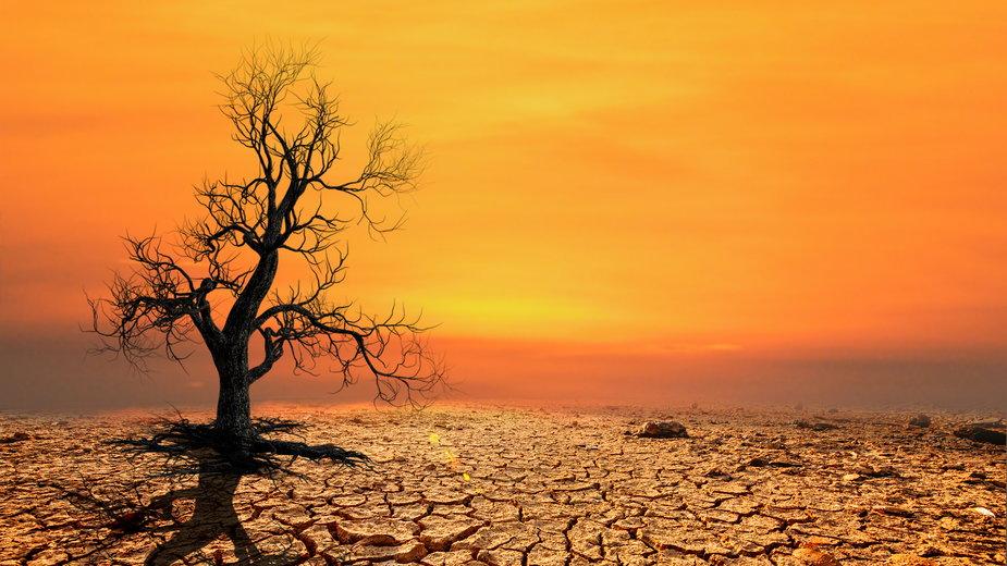 Kalifornia walczy z suszą