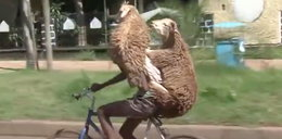 Dwie owce prowadzą rower? To nie tak jak myślisz!