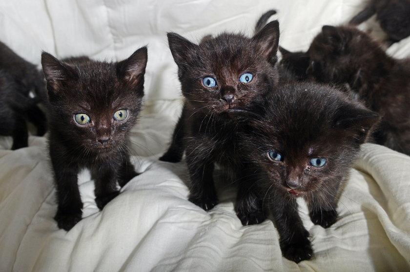Walizka z kociakami