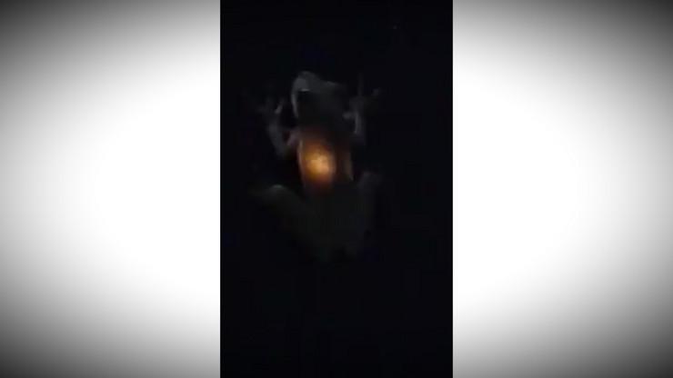 Zaba pojela hranu zbog koje svetli u mraku