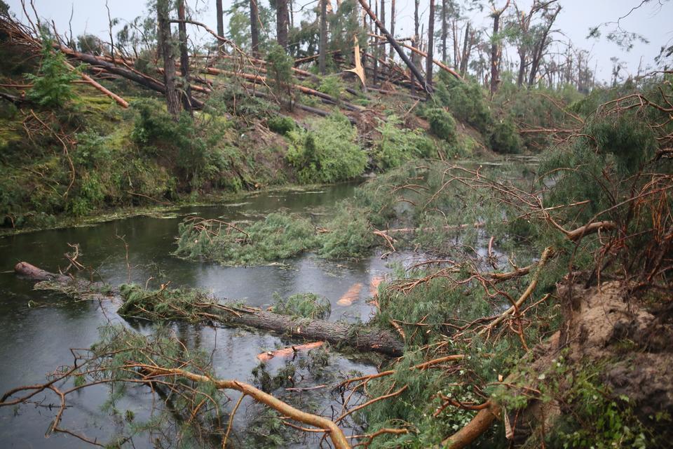 Usuwanie powalonych drzew w okolicach miejscowości Rytel