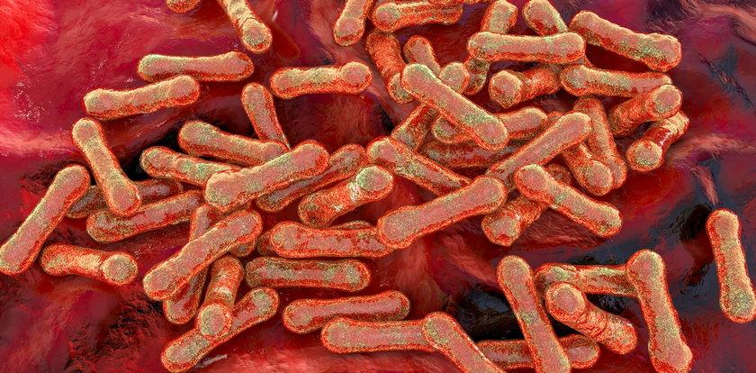 Przerażające informacje ze świata nauki. Eksperci z Wielkiej Brytanii i Indii mówią o powrocie niebezpiecznej choroby