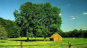 Dziedzictwo kulturowe 150 opolskich wsi opisane na portalu