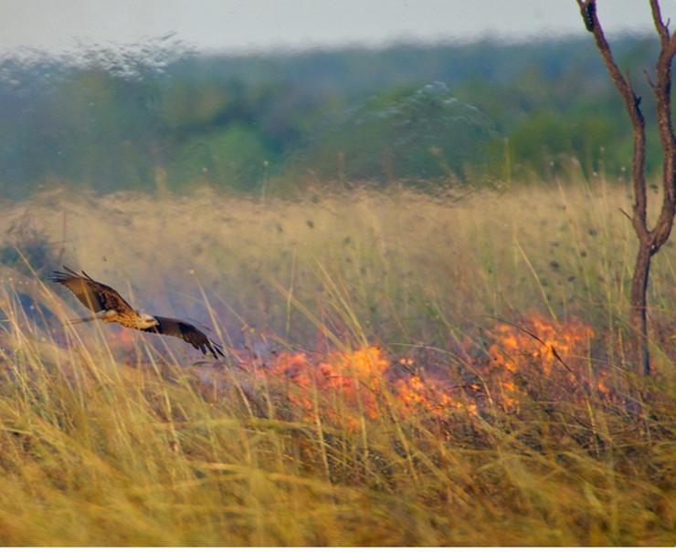 vatrene ptice
