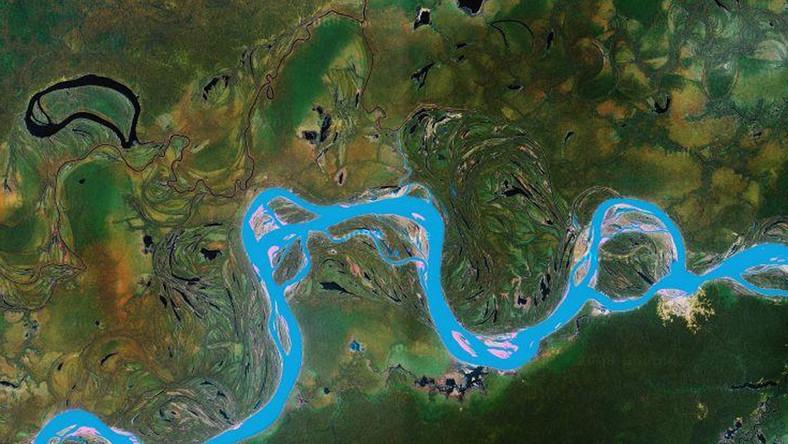 Zdjęcia satelitarne pomogą ratować zwierzęta