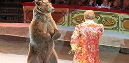 Niedźwiedź rzucił się na kobietę. Na cyrkowej arenie publiczność widziała sceny niczym z horroru