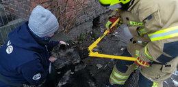 Właściciel zgotował psu straszny los. Aktywiści byli w szoku, gdy to zobaczyli. Musieli wzywać straż pożarną!