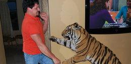 Hodują tygrysa w domu. Co za zdjęcia!