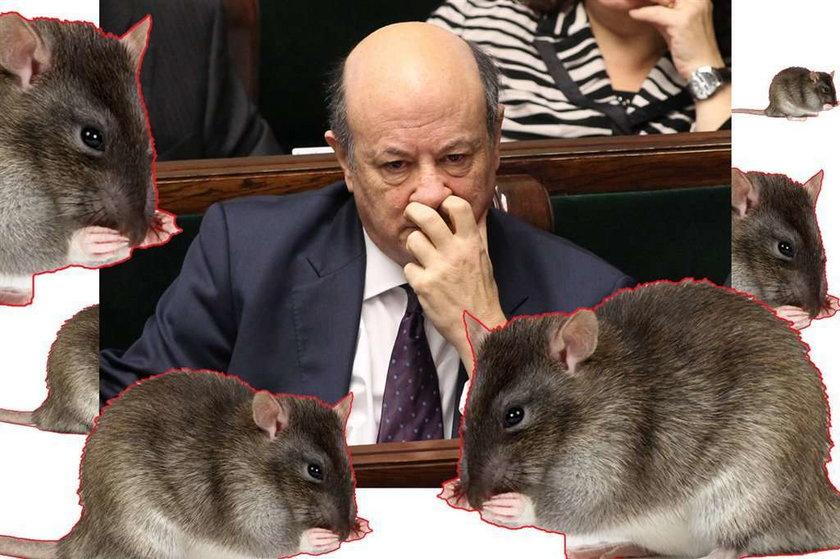 Ministra Rostowskiego otaczają szczury!
