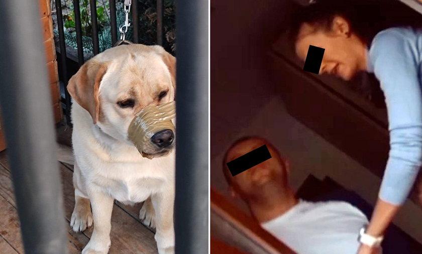 Koszmar psa. Zakleili mu pysk taśmą.