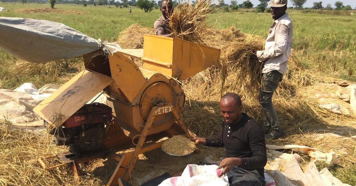 Nigeria has enough rice to last 2 years, says Enugu farmer - Pulse Nigeria