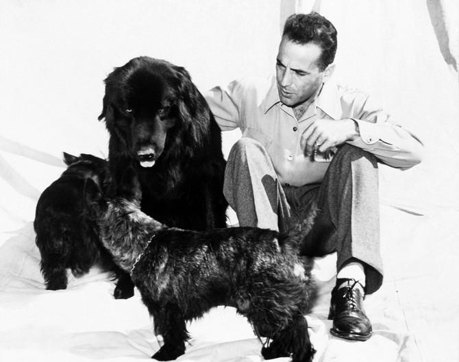 Bogart je oduvek voleo i imao pse