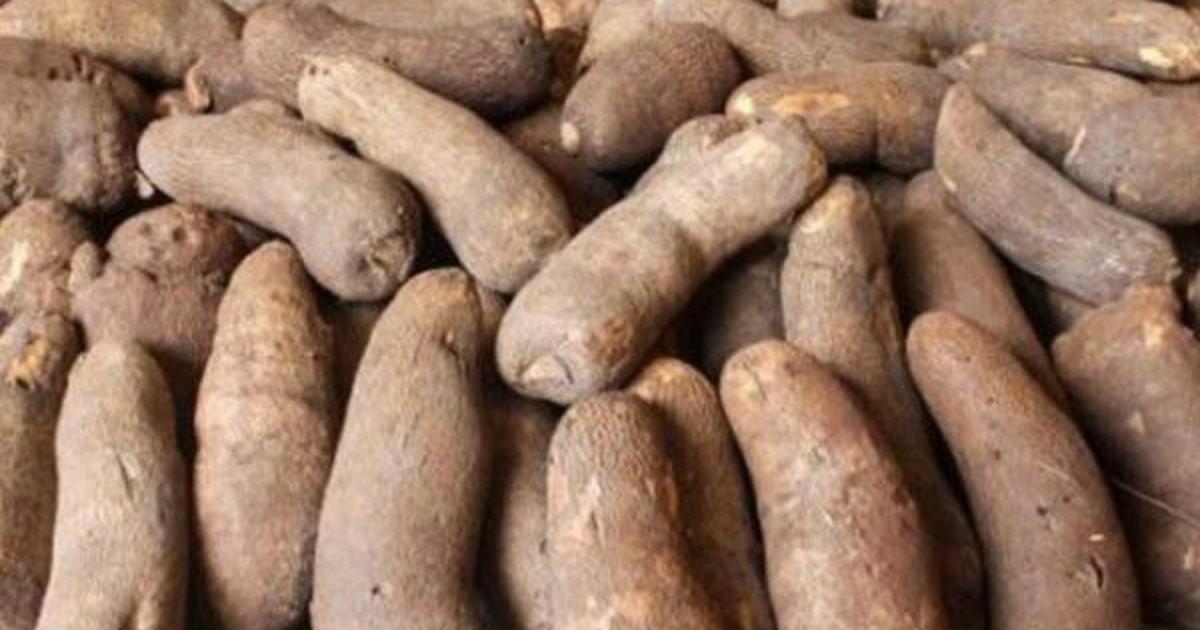 Man 'kills' father over cooked yam in Ebonyi - Pulse Nigeria