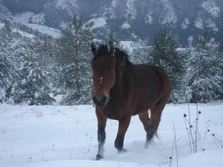 Kraljevo 01 - Konji na Stolovima - Foto N. Božović