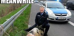 Tak świat się śmieje z Niemców! Zobacz dlaczego