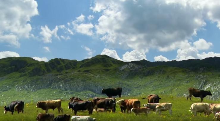 Sinjajevina planina sc youtube