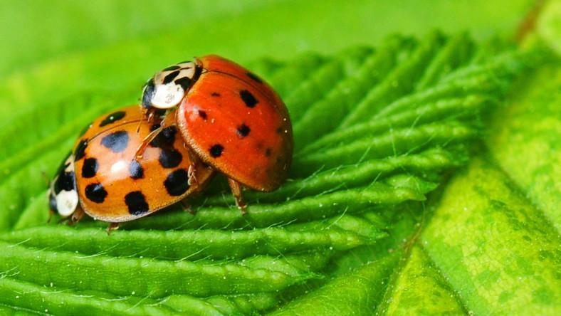Wiosenna, a patrząc na temperatury to właściwie letnia pogoda owładnęła wszystkich, także owady