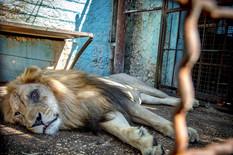 zoo albania profimedia-0391239326