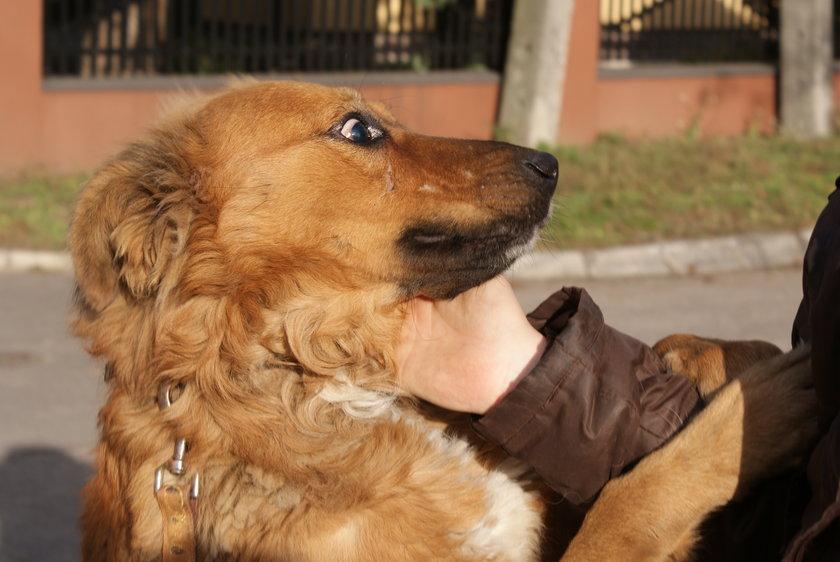 Fryderyk jest grzeczny i bardzo towarzyski. Aż trudno uwierzyć, że ze strony ludzi spotkało go tyle nieszczęścia. Piesek szuka kochającego domu.