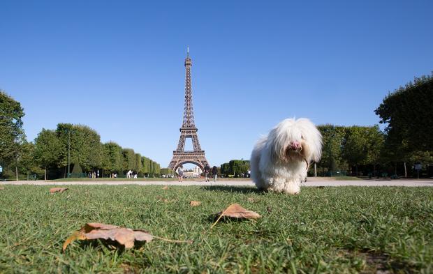 Pies w Paryżu