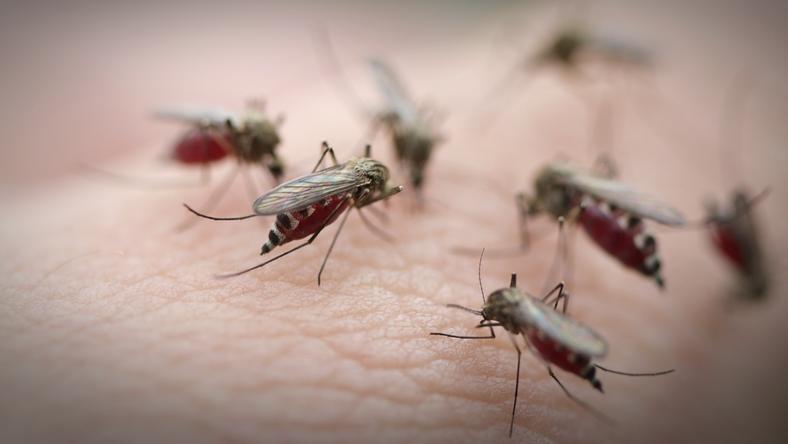 Lublin walczy z komarami
