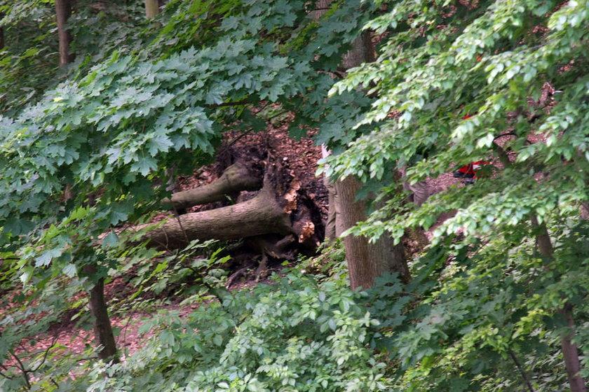 Wypadek w Ojcowskim Parku Narodowym