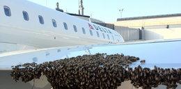 Pszczoły obsiadły samolot!