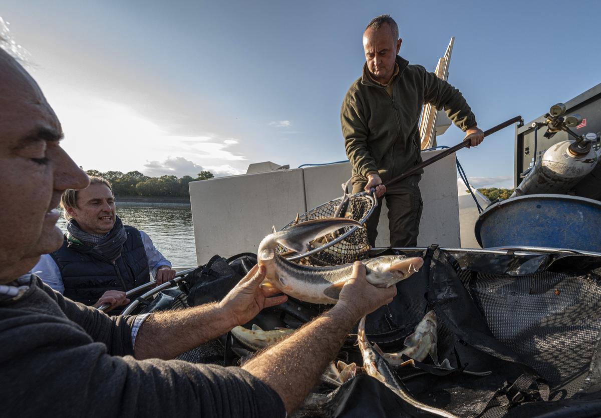 Véget ért a vadászati világkiállítás, Semjén Zsolt maga telepítette vissza a Dunába a bemutatott halakat – fotók