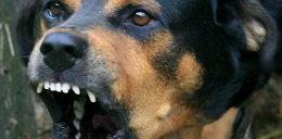 Szokujące sceny w Słupcy. Agresywny pies rzucił się na kobietę