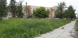 MPO będzie odbierać od mieszkańców trawę za darmo