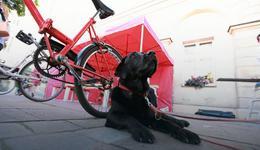 Psy ratownicze pod opieką Uniwersytetu