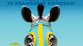 Zebra z klasą - plakaty