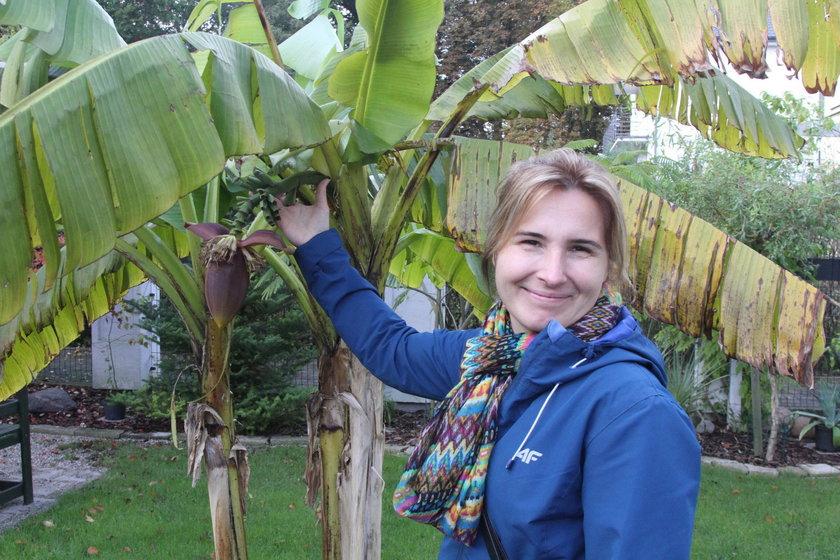 W ogrodzie wyrosły mi banany!