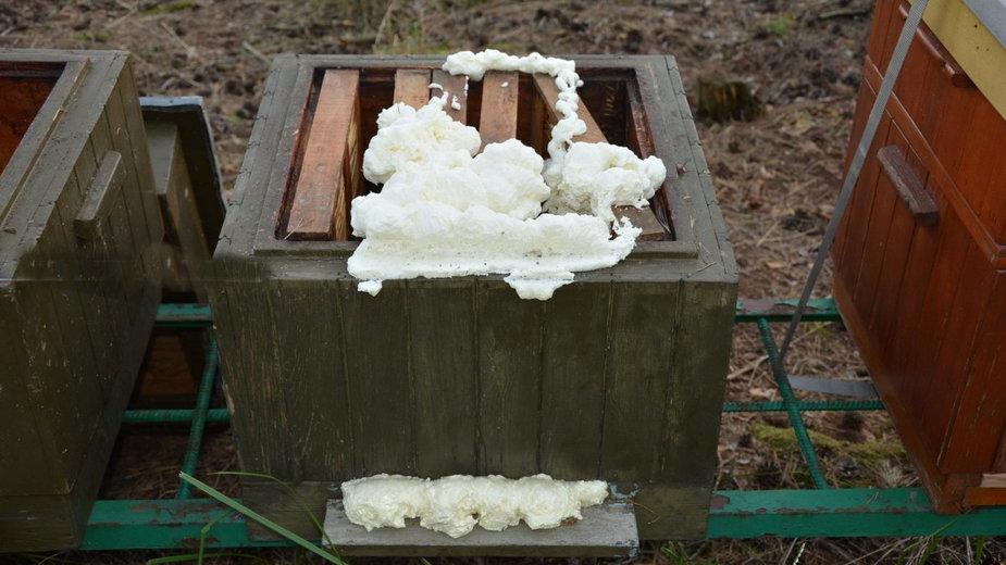 Z niewyjaśnionych przyczyn otruli 420 tys. pszczół. Sprawca nie przyznaje się do winy