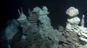 Odkryto brakujące ogniwo w ewolucji złożonych komórek