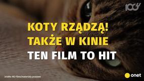 Koty rządzą także w kinie!