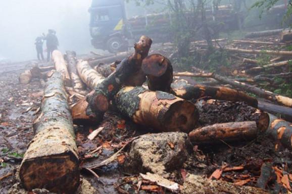 TRAGEDIJA TOKOM SEČE ŠUME Muškarca (74) usmrtilo stablo