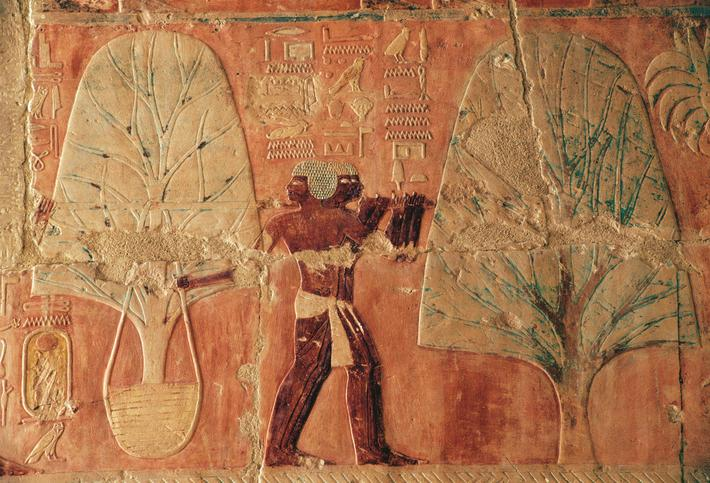 Carriage of tree, scenes of Punt kingdom, south wall of central colonnade, Mortuary Temple of Hatshe