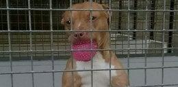 Policjanci zabili psa. Trzymali go w klatce przez 2 lata